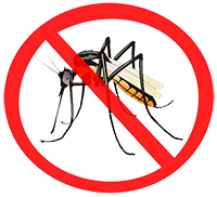 data/newtemplet/Mosquito-PNG2.png